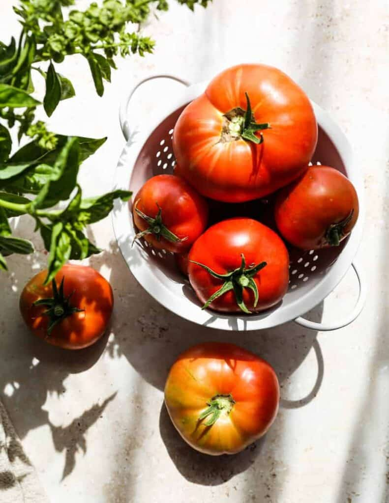 red, garden fresh tomatoes in a white colander with fresh basil that is blooming in a jar