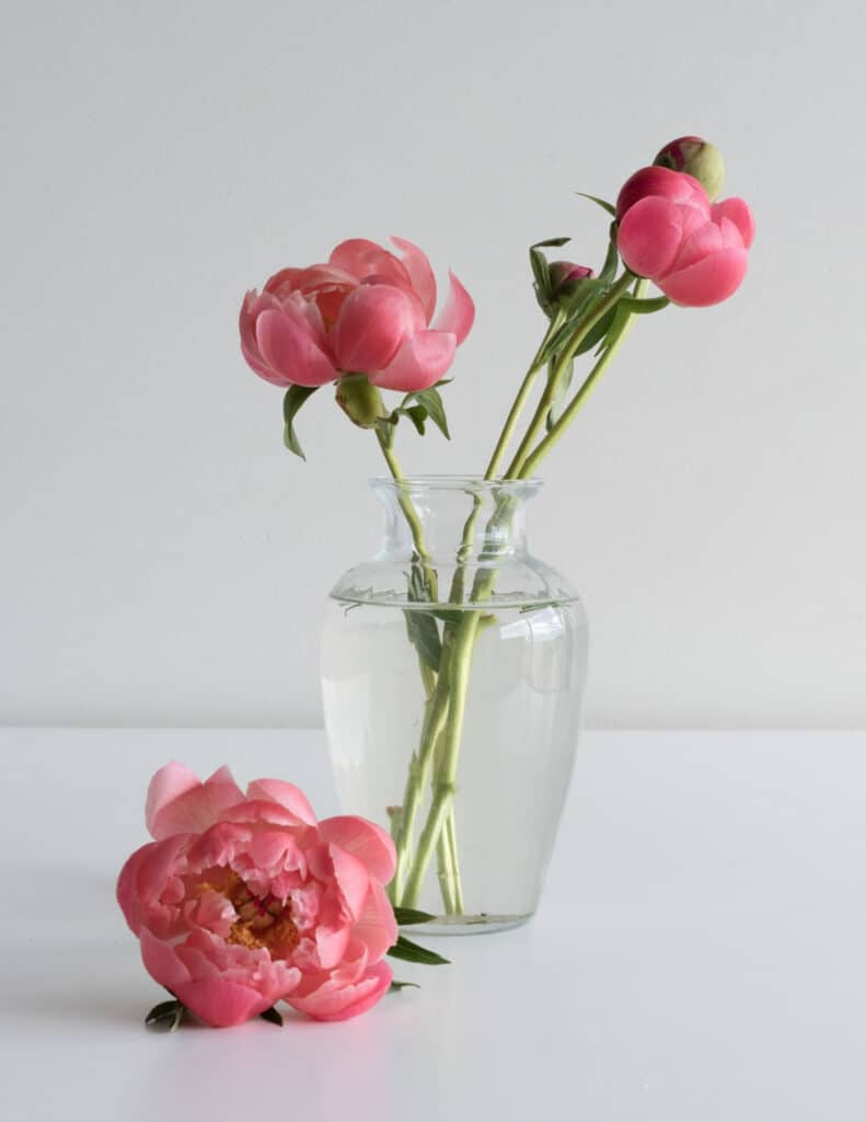 one of my favorite things is a simple glass vase with some pink peony flowers