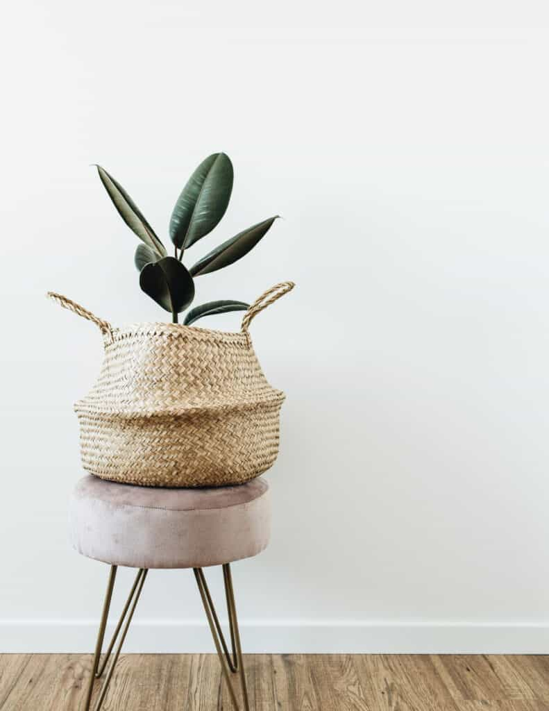 a favorite house plant in a basket on a stool in front of a white wall