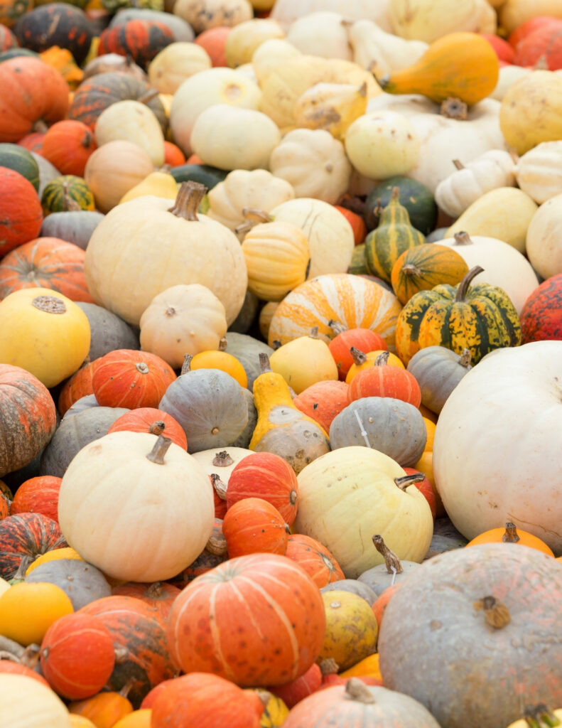 one of my favorite things are the piles of fall pumpkins in all different sizes at stores and farmer's markets